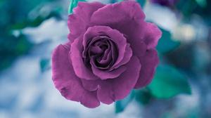 Macro Flower Pink Flower 4608x3072 Wallpaper