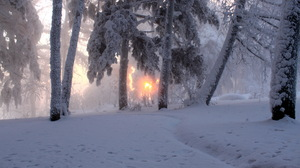 Snow Forest 3872x2582 Wallpaper