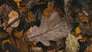 Fall Plants Fallen Leaves Water Drops 2560x1707 Wallpaper