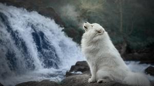 Outdoors Dog Animals Mammals Waterfall Samoyed 1920x1280 Wallpaper