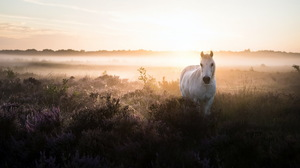Fog Horse 1920x1080 Wallpaper