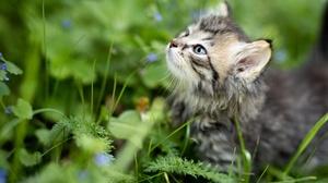 Baby Animal Cat Kitten Pet 5000x3337 Wallpaper