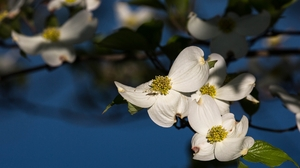 Branch Dogwood Flower Insect 2560x1440 Wallpaper