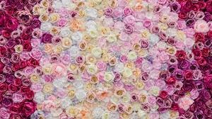 Flower Pink Flower Rose White Flower 5044x3363 wallpaper