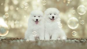 Dog Pet Baby Animal Puppy Bubble 1920x1280 Wallpaper