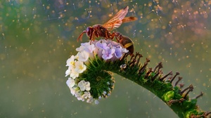 Colorful Wasps Insect Flowers Animals Plants Nature 2500x1719 Wallpaper