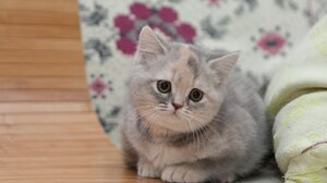 Kitten Baby Animal Pet 2560x1600 Wallpaper
