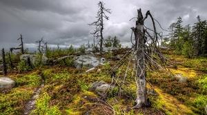 Russia Wood Tree Stump Plants 3840x2160 Wallpaper