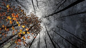 Canopy Cloud Earth Fall Leaf Tree 1920x1200 Wallpaper