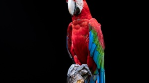 Bird Macaw Parrot Portrait Red And Green Macaw 2048x1536 Wallpaper