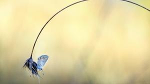 Blur Insect Macro 2560x1707 Wallpaper
