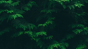 Nature Green Leaves Plants Trees 1920x1280 Wallpaper