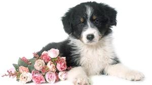 Cute Pink Flower Puppy Rose 5000x3366 Wallpaper