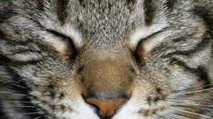 Animal Cat 3264x2448 Wallpaper