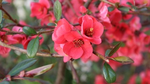 Blossom Flower Nature Red Flower Spring 5184x3456 Wallpaper