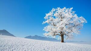 Tree Snow 1920x1080 Wallpaper