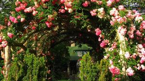 House Arch Pink Rose Rose Bush 1920x1440 Wallpaper