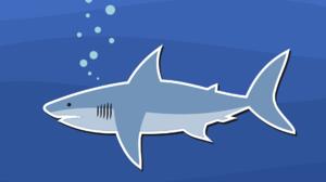 Artistic Shark 1920x1309 Wallpaper