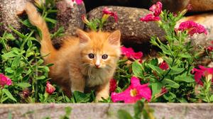 Cute Kitten 1920x1200 wallpaper