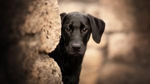 Dog Pet Baby Animal 2048x1365 Wallpaper