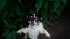 Pet Dog 4000x2670 wallpaper