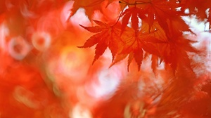 Depth Of Field Fall Leaf Nature 2048x1365 Wallpaper