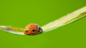 Green Insect Ladybug Macro Water Drop 2048x1365 Wallpaper