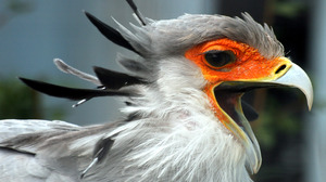 Animal Secretarybird 3268x2582 Wallpaper