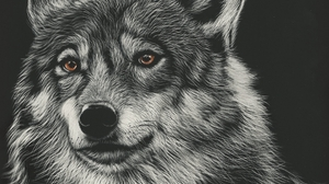 Animal Wolf 1920x1080 Wallpaper