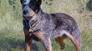 Dog Artistic 1600x1200 Wallpaper
