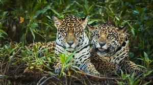 Big Cat Jaguar Wildlife Predator Animal 3840x2560 wallpaper