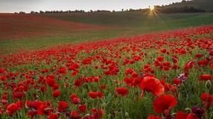 Field Flower Poppy Red Flower Sunrise 3840x2887 Wallpaper