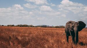 Elephant Wildlife 5184x3456 Wallpaper