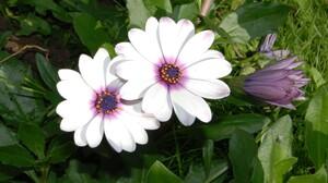 Daisy Flower Nature White Flower 3840x2400 Wallpaper