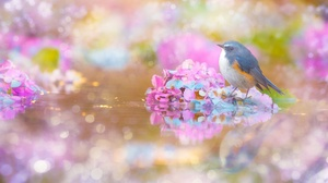 Bird Bluebird Flower Hydrangea Passerine Reflection Wildlife 2000x1333 Wallpaper