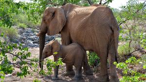 Baby Animal Elephant Wildlife 3335x2246 Wallpaper