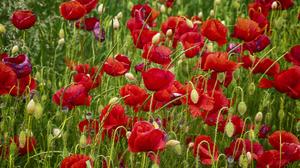 Flower Close Up Summer Red Flower 3872x2581 wallpaper