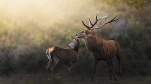 Animal Deer 3435x2268 wallpaper