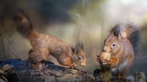 Rodent Squirrel Wildlife 1949x1188 wallpaper