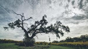 Cloud Lonely Tree Nature Tree Vineyard 2048x1366 Wallpaper