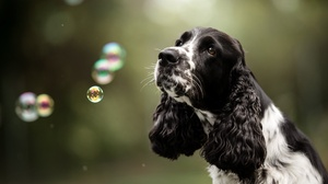 Depth Of Field Dog Pet 2048x1366 wallpaper
