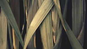Earth Grass 1920x1080 Wallpaper