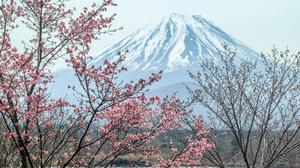 Mount Fuji Spring Branch Blossom Sakura Pink 4306x2871 Wallpaper