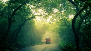 Forest Car Trees Mist Foliage Green Landscape Sunlight Road Nature 5000x3333 Wallpaper