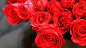Flower Red Flower Red Rose Rose 2048x1365 wallpaper