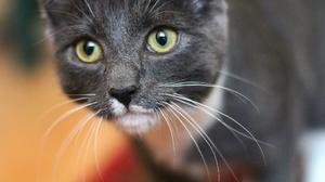 Pet Close Up 2048x1365 wallpaper