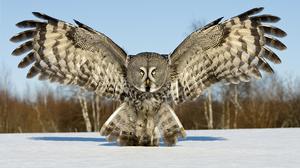 Animal Owl 1920x1286 Wallpaper