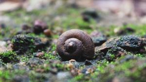 Nature Shell Snail 4096x2304 wallpaper