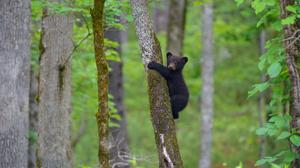 Baby Animal Bear Cub Wildlife 2048x1367 Wallpaper