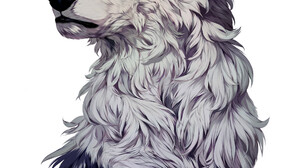 Marina Ivankina Artwork Portrait Display Drawing White Background Wolf Digital Art ArtStation 1920x2310 Wallpaper